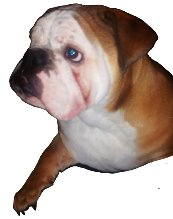 Jose's dog